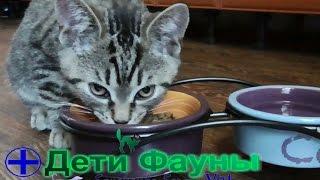 Миски для кошек. Сэму купили новые миски на подставке! Автор ветеринар