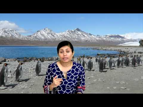 Antarctica Trip Planning Tips and Tricks | Dream Vacation Bo