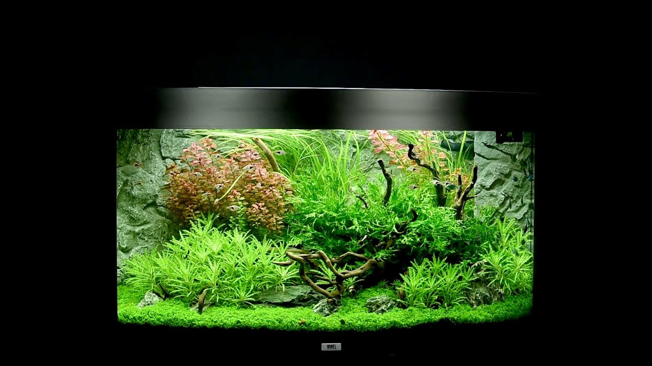 juwel aquarium vision 180 einrichtungsbeispiel tutorial. Black Bedroom Furniture Sets. Home Design Ideas
