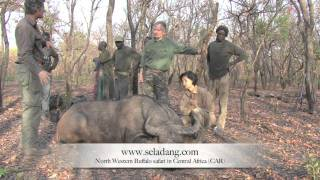 Video BUFFALO BUFFLE HUNTING (Chasse) in CENTRAL AFRICA  by Seladang download MP3, 3GP, MP4, WEBM, AVI, FLV Agustus 2018