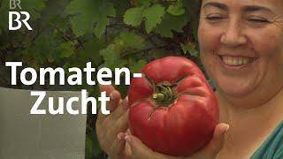 Irina und ihre Tomaten S und saftig  Zwischen Spessart und Karwendel  BR Fernsehen