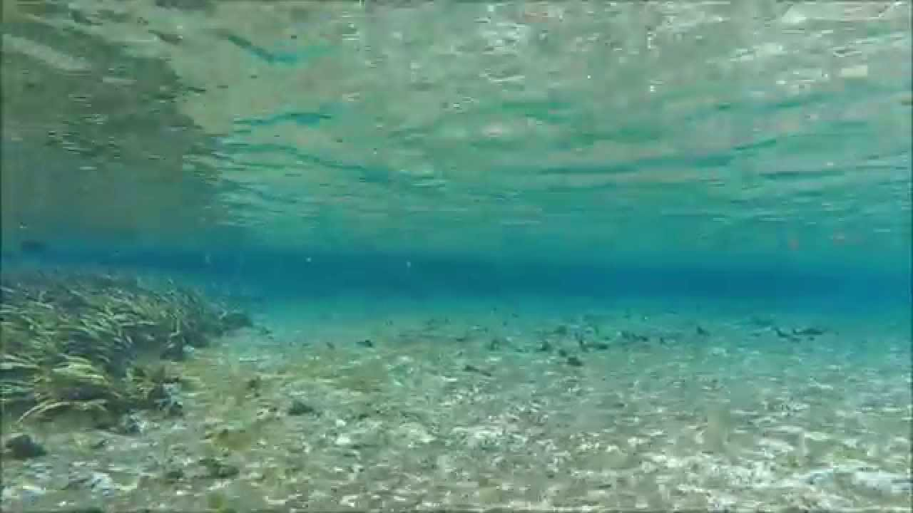 Alexander Springs - Ocala National Forest - Play, Swim, Snorkel, Scuba -  Local Travel - Staycation