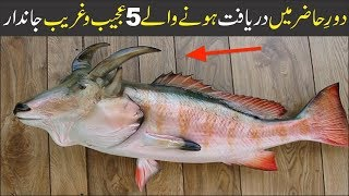 5 Weird Animals Discovered in a Recent Era | Asif Ali TV |