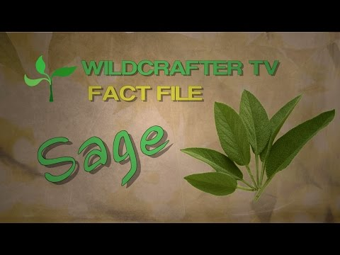 Sage Herb Fact File: Uses and Benefits of Sage Herb