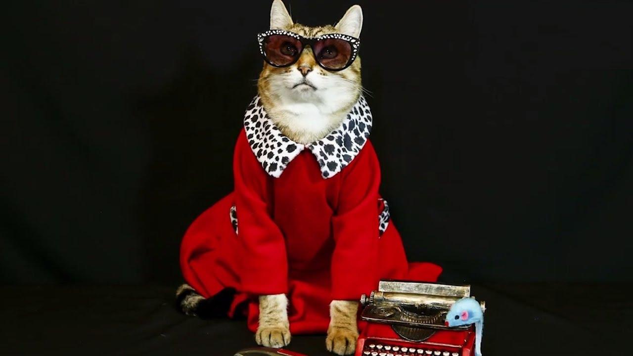 Кот - фотомодель