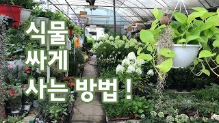 식물 싸게 살  수 있는 곳! 도매상들이 식물 사는 곳…