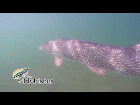 Top Water Pike Frenzy