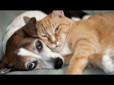 Try Not To Laugh Challenge - Funny cat, dog video Compilation 2017