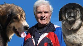 Stojana dva velika psa čuvaju od vukova