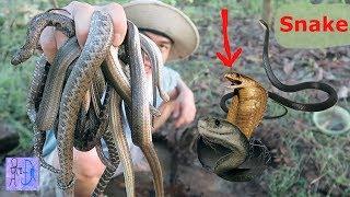Bắt Được Tổ Rắn To Khủng Khiếp Trong Hang .Bắt Rắn Độc Bằng Tay .Catch Big Snake By Hand