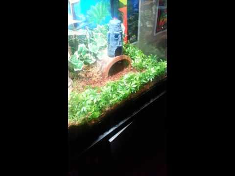 Nice Snake Aquarium