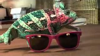 Super Chameleon thumbnail