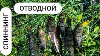 Рыбалка на спиннинг Рыбалка в подмосковье Окуни Отводной поводок Отдых на природе