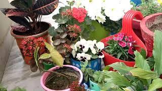 छोटे गमले/पॉट में लगाएं ये पौधे,रहेंगे हमेशा स्वस्थ  और हरे भरेanvesha,s creativity