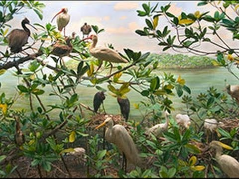 Birding at the Museum: Dioramas and Conservation