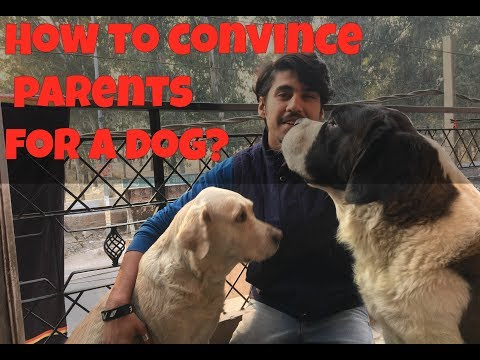 How to CONVINCE YOUR PARENTS FOR A DOG | Wildly Indian