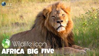 Lion pride 2021  Africa Big Cat Documentary 2021 (English subtitles)  Nat Geo Wild .