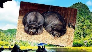 ДИКИЕ И ДОМАШНИЕ ЖИВОТНЫЕ ВО ВЬЕТНАМЕ / Wild & domestic animals in Vietnam ☯ Культурный код