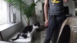Прикольный кот просит внимания!Смотреть всем!