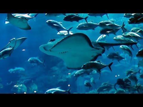 Largest Aquarium in Atlantis Hotel Dubai,The lost chambers Aquarium,Aquarium fish Tank