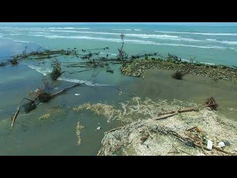 曾文溪北岸防風林 20180820   最後一棵死樹 環景00