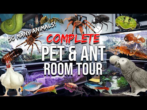 FULL ANT & PET TOUR | Millions Of Ants, Tarantulas, Reptiles, Amphibians, Birds, Fish, Terrariums