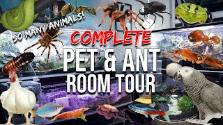 full-ant-pet-tour-millions-of-ants-tarantulas-reptiles-amphibians-birds-fish-terrariums