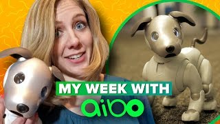 Sony Aibo: what it
