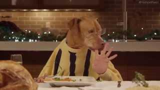 Freshpet Holiday Feast: застолье 13 собак и 1 кота