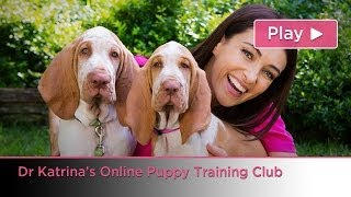 Dr Katrina's Online Puppy Training Club