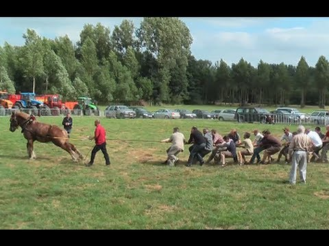 TUG OF WAR: 1 Horse against 18 men