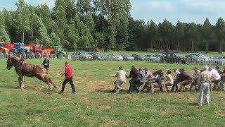 TUG OF WAR: 1 Horse against 18 men