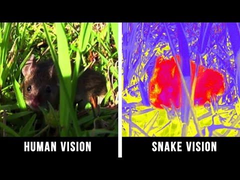 Thumbnail: HOW ANIMALS SEE THE WORLD