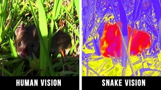HOW ANIMALS SEE THE WORLD