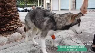 Rota dolor alivio pierna de perro de