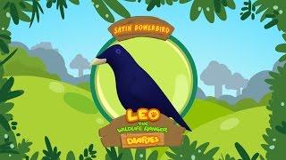 Leo The Wildlife Animal Diaries - Satin Bowerbird   Learning For Kids   Cartoon   Junior Ranger