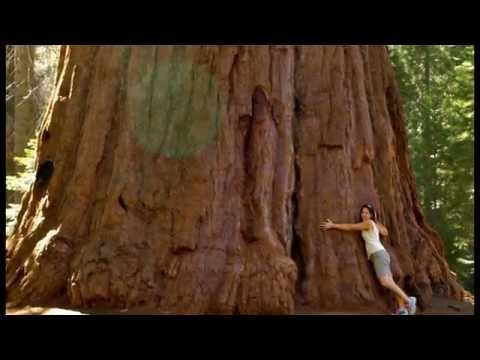 The Biggest Tree | in the world