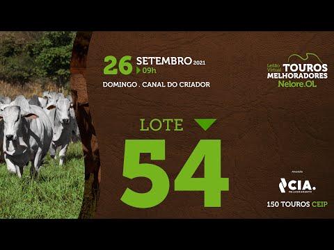 LOTE 54 - LEILÃO VIRTUAL DE TOUROS 2021 NELORE OL - CEIP
