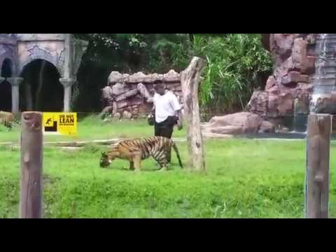 Harimau Show | Bali Safari & Marine Park | Private Tours of Bali - YukmariGO.com