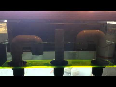 Reef Synergy overflow with bean animal plumbing