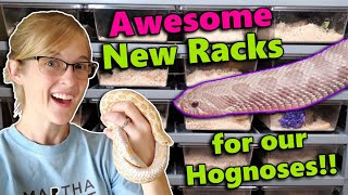 We got an EPIC rack for our Hognose Snakes!