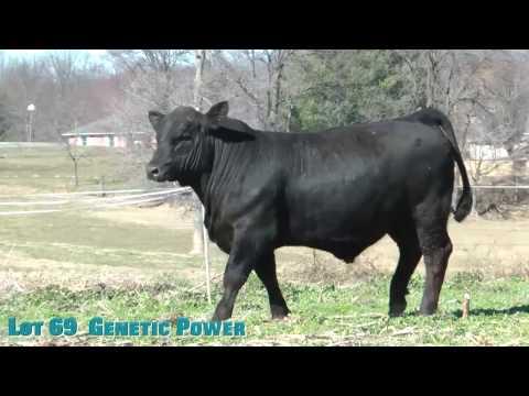 Lot 69  Genetic Power