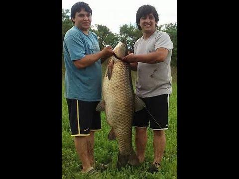 Pesca De Carpa 31,45 Kgs (69,3 Lbs). Cordoba. Argentina. Fishing Carp. Www.aquipesca.com Carpas