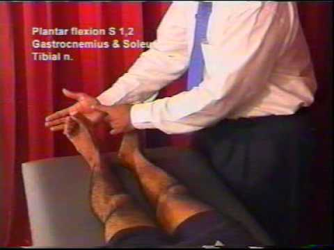 Neurological Examination of the Lower limb