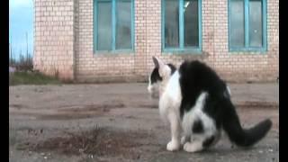 Жизнь глазами котенка