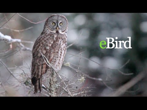 Introduction to eBird