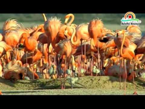 Flamencos Lago Epecuen Carhue - Adolfo Alsina