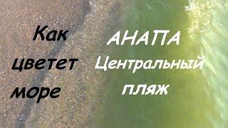 АНАПА Центральный пляж. Как цветет вода в Анапе(Подписаться на мой канал: http://www.youtube.com/subscription_center?add_user=palmoviyostrov ✓Инстаграм: https://instagram.com/katya_travel ✓Я ..., 2016-08-14T08:50:16.000Z)