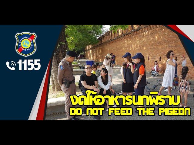 งดให้อาหารนกพิราบ | ประตูท่าแพ | ตำรวจท่องเที่ยว