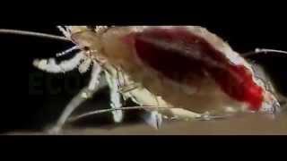 Чем опасны вши, какие болезни переносят вши(Как избавиться от вшей. Чем они опасны, какие болезни переносят вши? Служба уничтожения вшей и других насеко..., 2015-09-29T14:03:02.000Z)